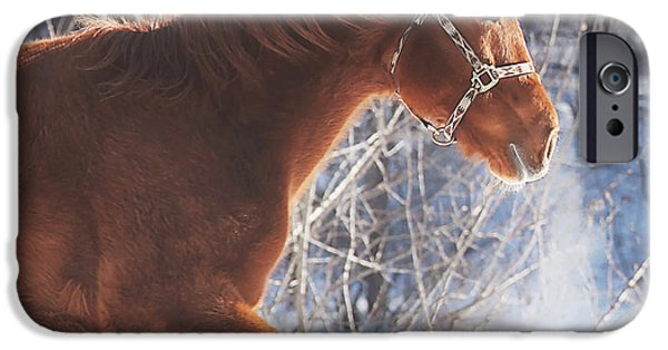Horses iPhone Cases - Cold iPhone Case by Carrie Ann Grippo-Pike
