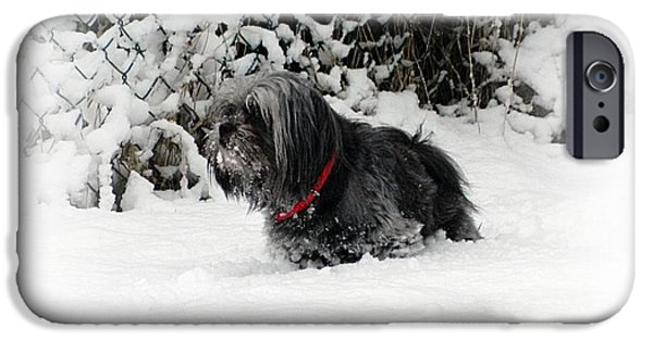 Dog In Snow iPhone Cases - Cold feet iPhone Case by Sharon Lisa Clarke