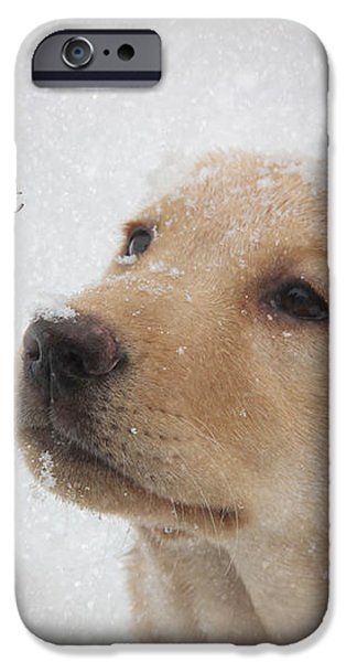 Cold Nose Warm Heart iPhone Case by Lori Deiter