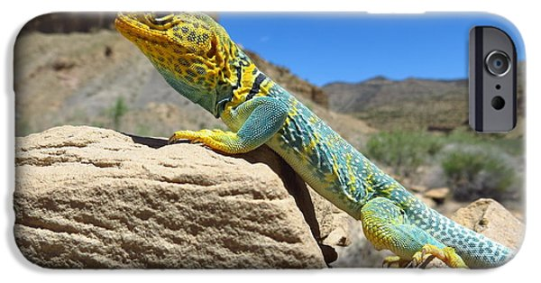 Casey iPhone Cases - Collared Lizard iPhone Case by Casey Hodnett