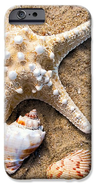 Nature Abstract iPhone Cases - Collecting Shells iPhone Case by Colleen Kammerer