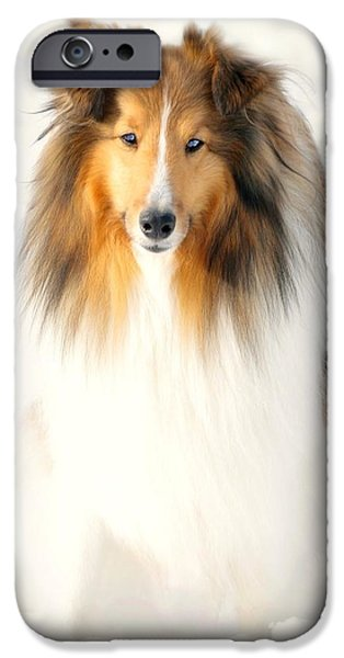 Dog In Snow iPhone Cases - Collie  iPhone Case by Diana Angstadt