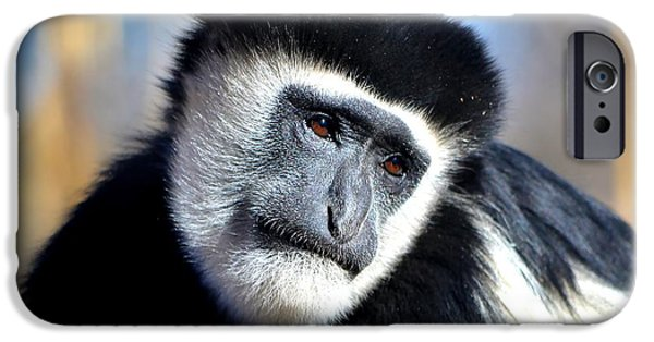 Gray Hair iPhone Cases - Colobus Contemplation iPhone Case by Deena Stoddard