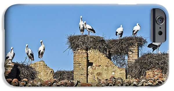 Zoologic iPhone Cases - Colony of Storks Nesting iPhone Case by Heiko Koehrer-Wagner