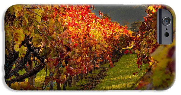 Bill Gallagher Photographs iPhone Cases - Color On the Vine iPhone Case by Bill Gallagher
