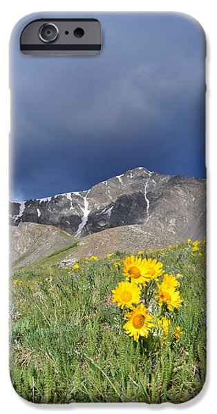 Dog And Wildflowers iPhone Cases - Colorado Beauty iPhone Case by Aaron Spong
