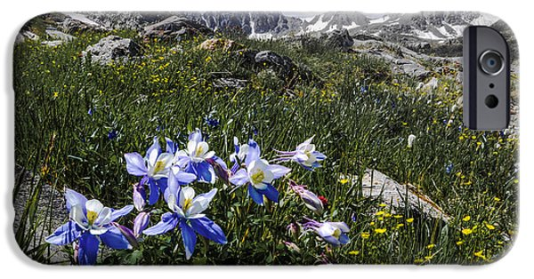 Recently Sold -  - Snowy iPhone Cases - Colorado Columbines iPhone Case by Aaron Spong