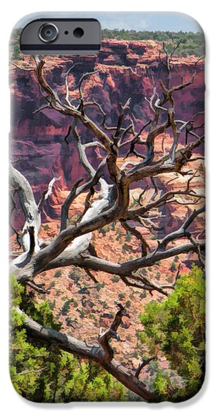 Pinion Paintings iPhone Cases - Colorado National Monument Dead Branches iPhone Case by Christopher Arndt