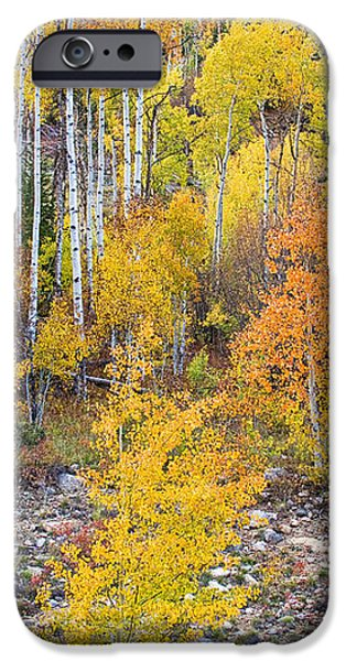 Colorful Autumn Forest In The Canyon of Cottonwood Pass iPhone Case by James BO  Insogna