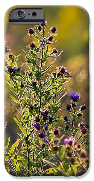 Colorful Bouquet Of Purple Aster Flowers iPhone Case by Christina Rollo