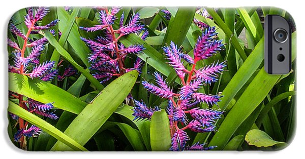 Bromeliad iPhone Cases - Colorful Bromeliad iPhone Case by Douglas Barnett