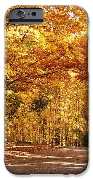 Colorful Canopy iPhone Case by Sandy Keeton