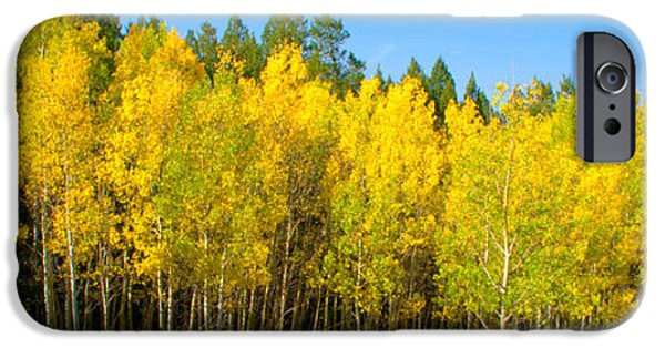 Autumn iPhone Cases - Colorful Colorado 2 iPhone Case by Brian Harig