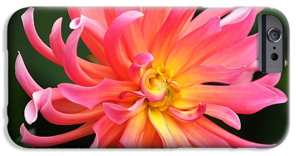 Flora iPhone Cases - Colorful Dahlia iPhone Case by Rona Black
