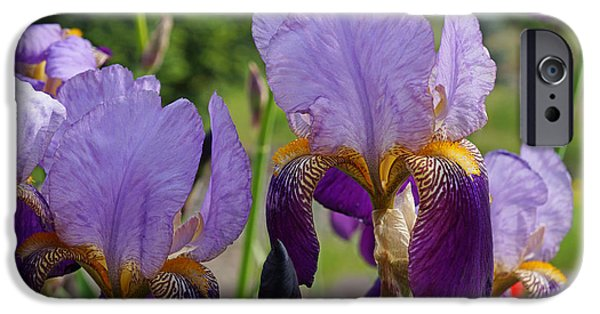 Yellow Bearded Iris iPhone Cases - Colorful Fine Art Prints Purple Iris Flowers iPhone Case by Baslee Troutman Floral Fine Art