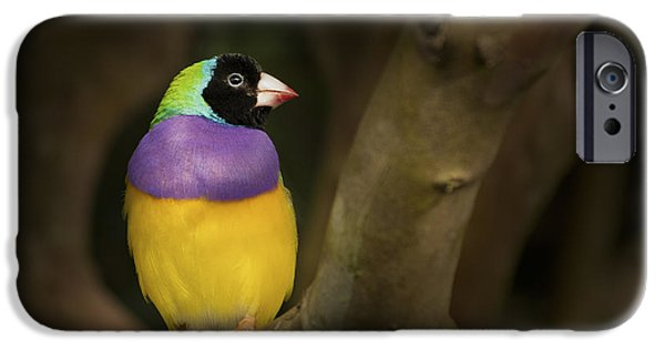 Wild Animals iPhone Cases - Colorful Gouldian Finch iPhone Case by Penny Lisowski