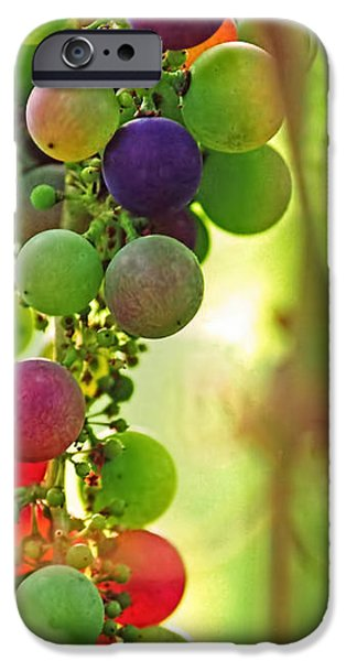 Colorful Grapes iPhone Case by Peggy Collins