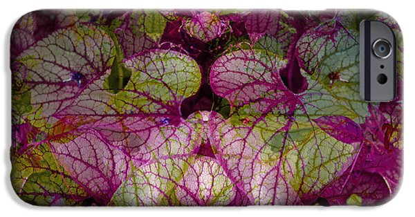 Nature Abstracts Pyrography iPhone Cases - Colorful Leaf iPhone Case by Eiwy Ahlund