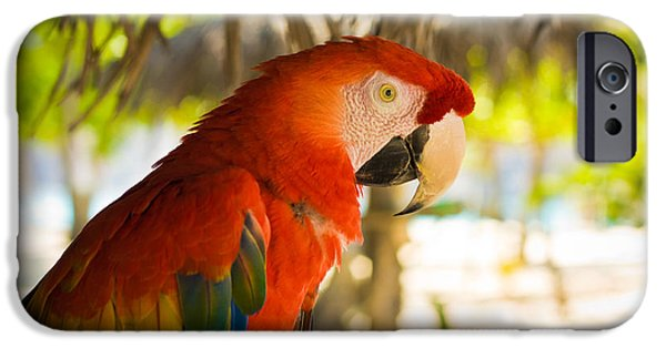 Jaco iPhone Cases - Colorful Macaw iPhone Case by Anthony Doudt