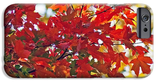 Square Photographs iPhone Cases - Colorful Maple Leaves iPhone Case by Rona Black