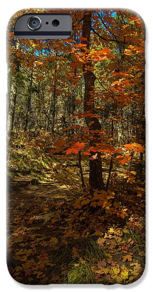 West Fork iPhone Cases - Colorful Path iPhone Case by Tam Ryan