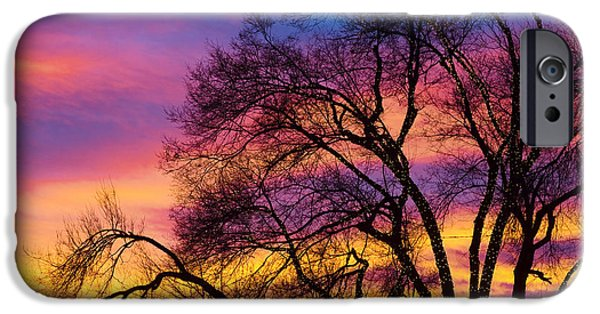 Epic iPhone Cases - Colorful Silhouetted Trees 25 iPhone Case by James BO  Insogna