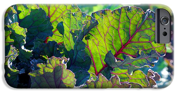 Swiss Chard iPhone Cases - Colorful Swiss Chard iPhone Case by Nancy Mueller