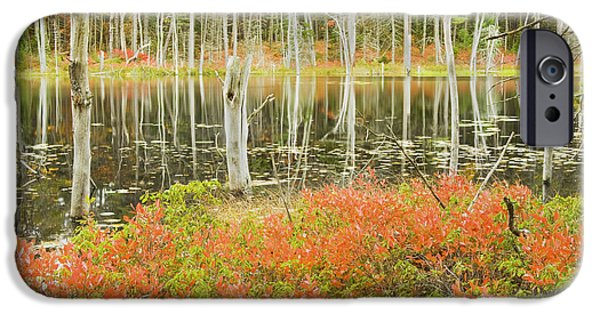 Maine iPhone Cases - Colorful Trees Reflecting In Maine Beaver Pond iPhone Case by Keith Webber Jr