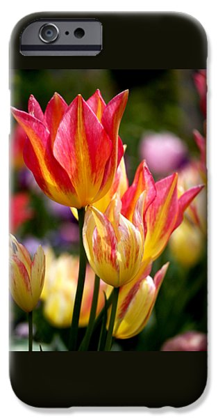 Color Photographs iPhone Cases - Colorful Tulips iPhone Case by Rona Black