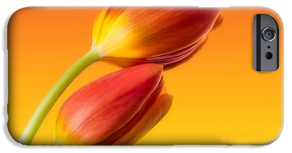 Photography Photographs iPhone Cases - Colorful Tulips iPhone Case by Wim Lanclus