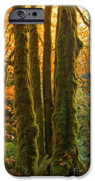 State Parks In Oregon iPhone Cases - Colors In The Rainforest iPhone Case by Adam Jewell