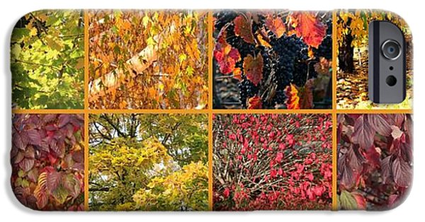 Colors Of Autumn iPhone Cases - Colors of Fall Collage iPhone Case by Carol Groenen