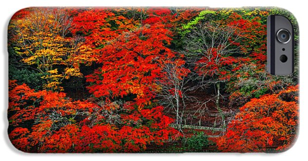 Kyoto iPhone Cases - Colors of Fall iPhone Case by Midori Chan