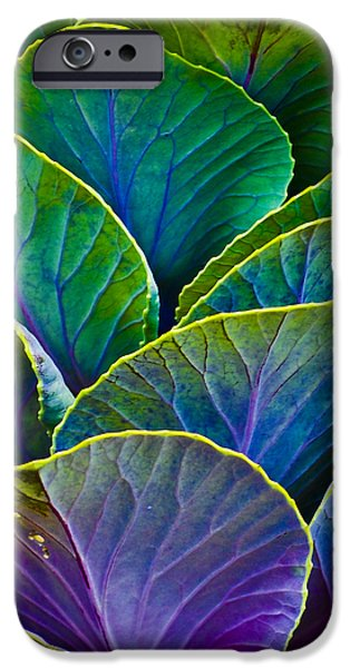 Christi Kraft iPhone Cases - Colors of the Cabbage Patch iPhone Case by Christi Kraft
