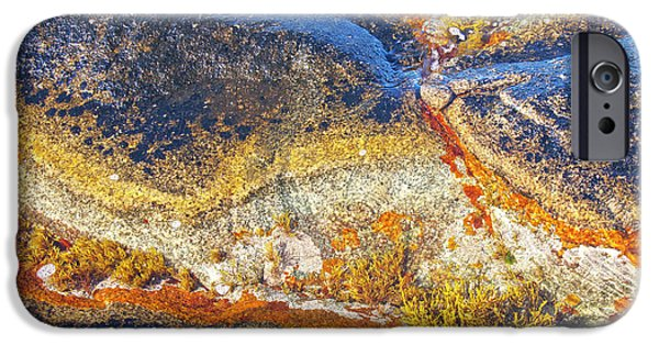 Alga iPhone Cases - Colors on rock I iPhone Case by Heiko Koehrer-Wagner