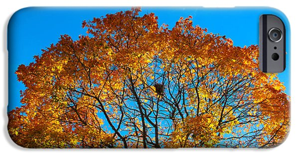 Fall iPhone Cases - Colourful autumn tree against blue sky iPhone Case by Kerstin Ivarsson