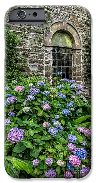 Hydrangeas iPhone Cases - Colourful Hydrangeas iPhone Case by Adrian Evans