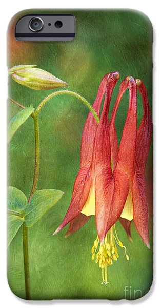 Indiana Springs iPhone Cases - Columbine - D008453-a iPhone Case by Daniel Dempster