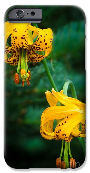 Lilium iPhone Cases - Columbine Lilies iPhone Case by Inge Johnsson