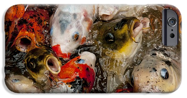Butterfly Koi iPhone Cases - Come On In the Water Is Great iPhone Case by Wilma  Birdwell