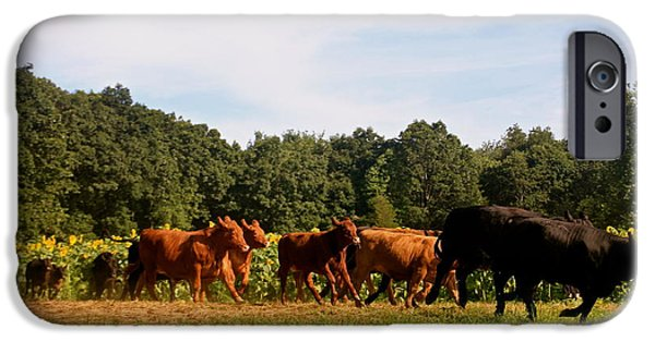Buttonwood Farm iPhone Cases - Come Running iPhone Case by Dorothy Drobney