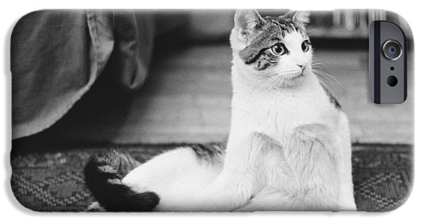 Animal Portraiture iPhone Cases - Come Up And See Me Sometime iPhone Case by Suzanne Szasz