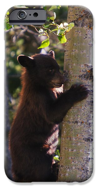 Bear Cub iPhone Cases - Coming Down iPhone Case by Mark Kiver
