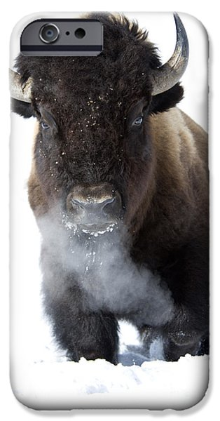 Bison Photographs iPhone Cases - Coming Through iPhone Case by Deby Dixon