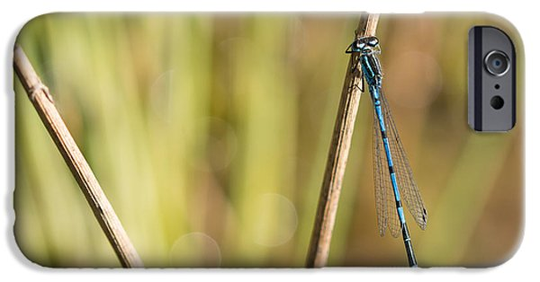 Fauna iPhone Cases - Common Blue Damselfly iPhone Case by Robert Carr