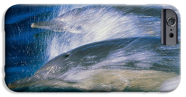 Two Waves iPhone Cases - Common Dolphins Breaching In The Sea iPhone Case by Panoramic Images