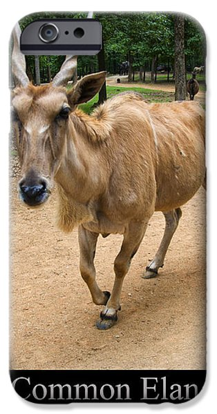 Common Eland iPhone Case by Chris Flees
