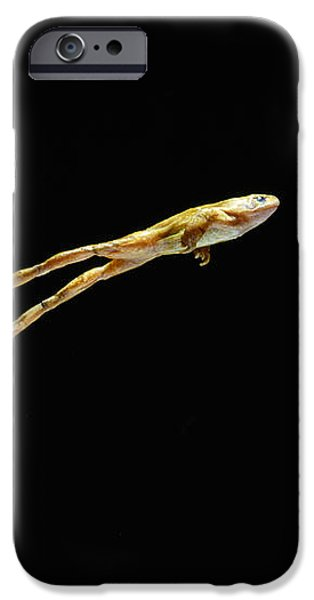 Common Frog Leaping iPhone Case by Stephen Dalton