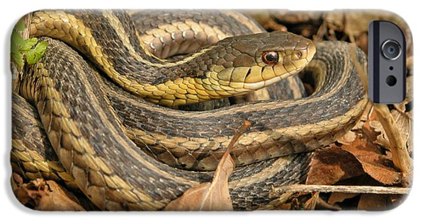 Serpent iPhone Cases - Common Garter Snake iPhone Case by Gerald DeBoer