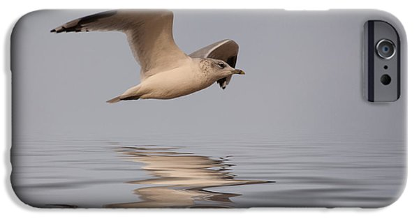 Sea Birds iPhone Cases - Common Gull Larus canus in flight iPhone Case by John Edwards